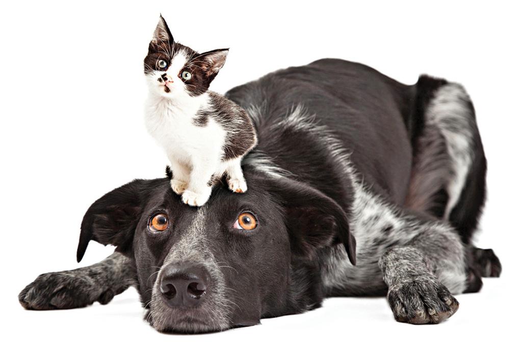 <strong>ARQUIVO MENTAL – Cães e gatos têm memória episódica, como seus donos. isso significa que eles são capazes de se lembrar de fatos e de locais onde estiveram anos antes. </strong>