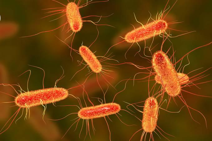"""Bactérias E.coli """"gritam"""" quando morrem"""