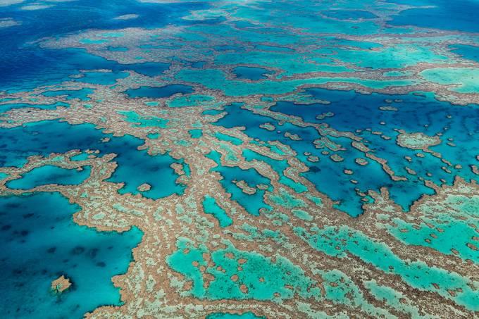 biobanco-corais_site