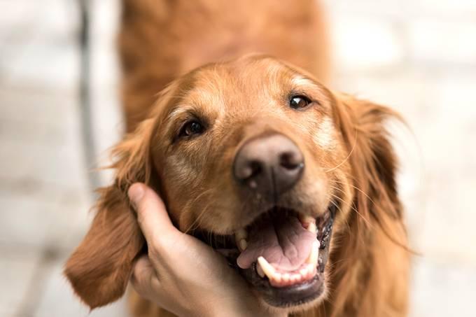 Cães preferem o rosto de outros cães aos de humanos