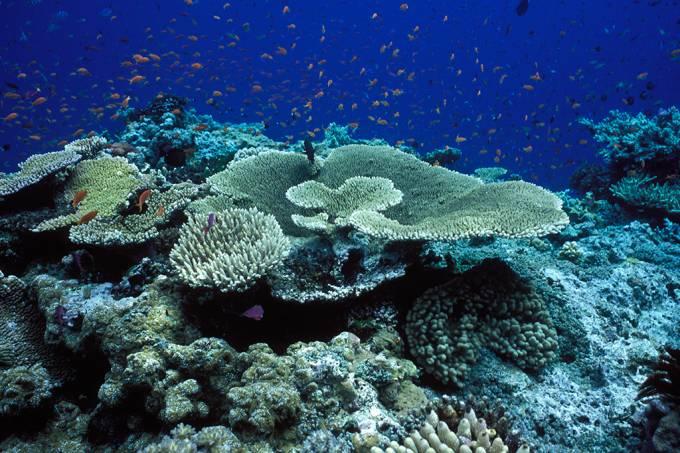 Metade dos corais da Grande Barreira da Austrália morreu nos últimos 25 anos