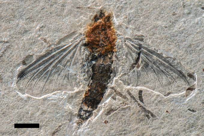 fóssil-inseto_site