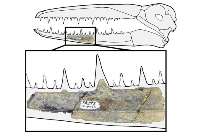 Fóssil de pássaro com 6,4 metros de envergadura é encontrado na Antártica