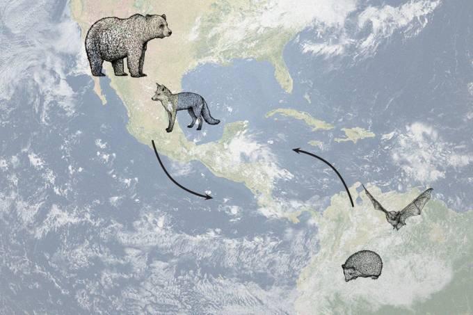 Quase metade dos mamíferos da América do Sul vieram da América do Norte, aponta estudo