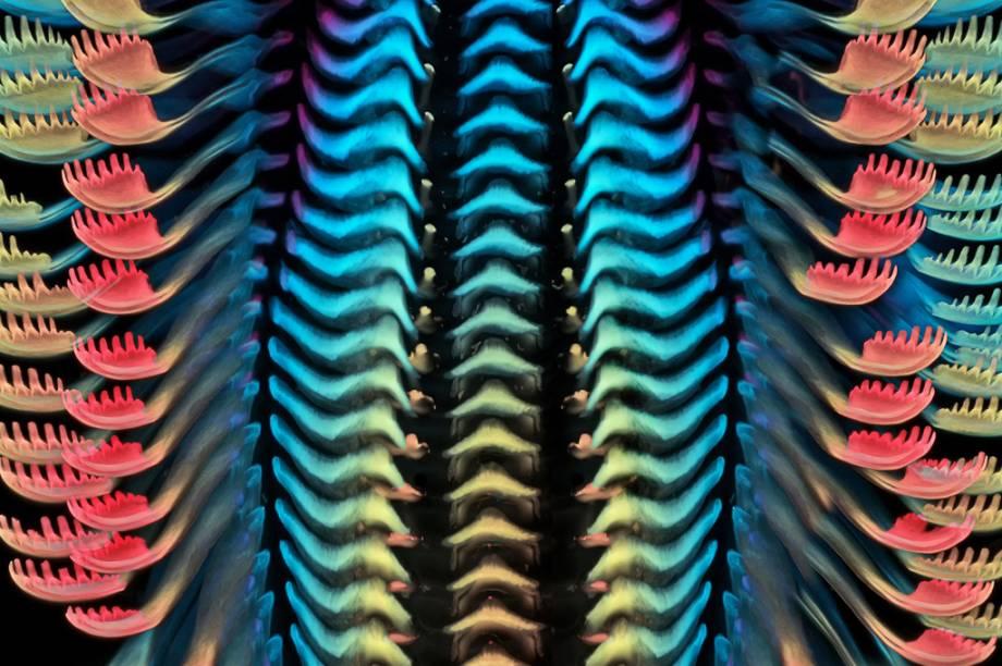 3º lugar: A rádula – estrutura raspadora que serve como a língua de moluscos – de um caramujo de água doce, ampliada 40 vezes.