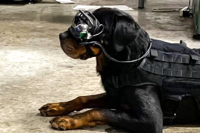 Exército americano está testando óculos de realidade aumentada para cães de combate