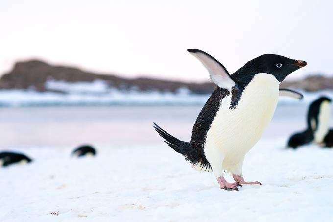 Derretimento de gelo revela pinguins mumificados na Antártida