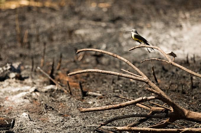 Savanização das florestas tropicais impactará mais de 200 espécies de animais