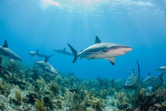 A relação entre a morte de tubarões e a produção de uma vacina para a Covid-19