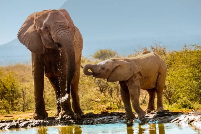 Elefantes perdem duas banheiras de água em dias quentes