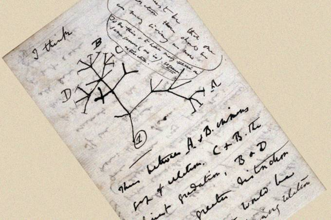 Roubo do caderno do Darwin