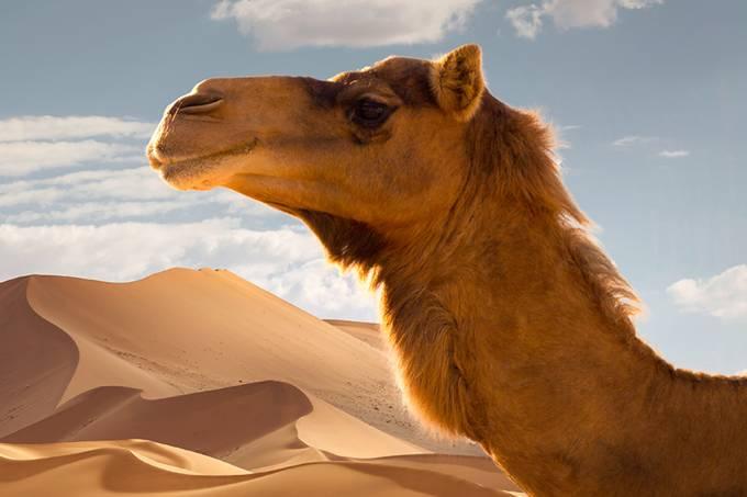Tecnologia inspirada em pele de camelo pode prolongar o aquecimento de superfícies