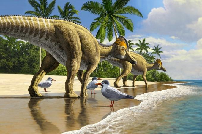 Fósseis de dinossauro bico de pato são encontrados pela primeira vez na África