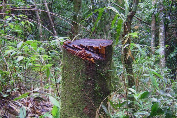 desmatamento na mata atlântica