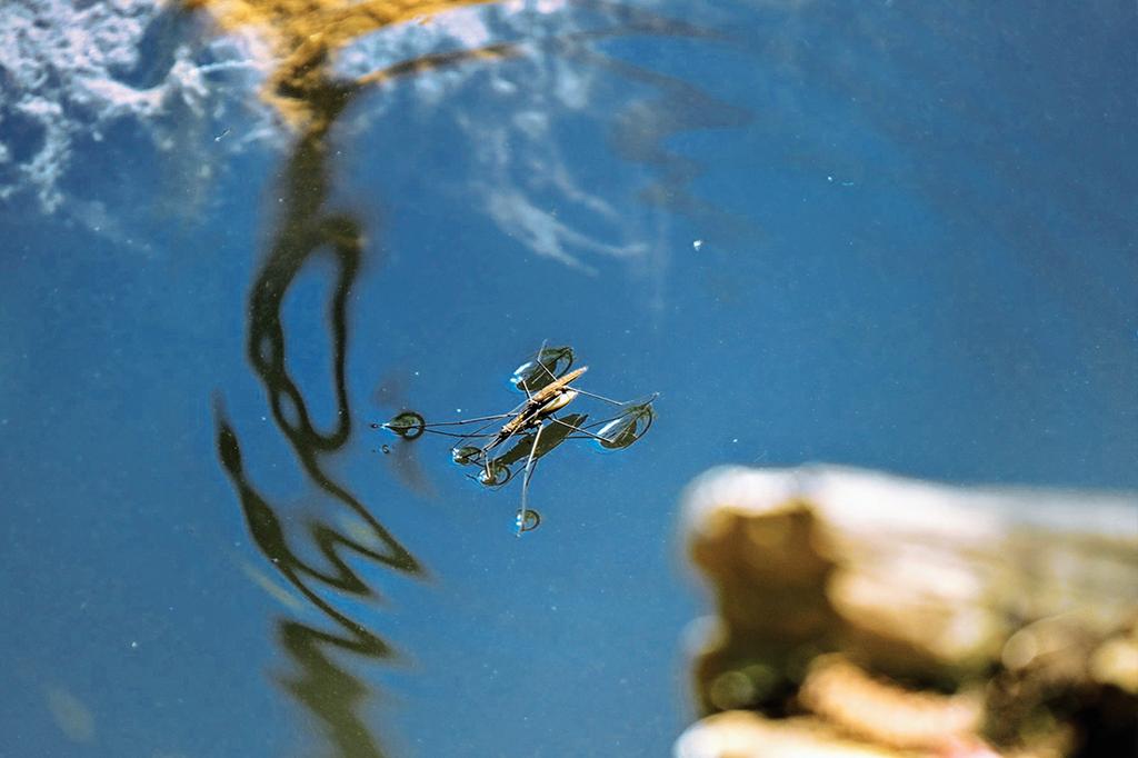 A tensão superficial permite que insetos caminhem em lagos e piscinas.