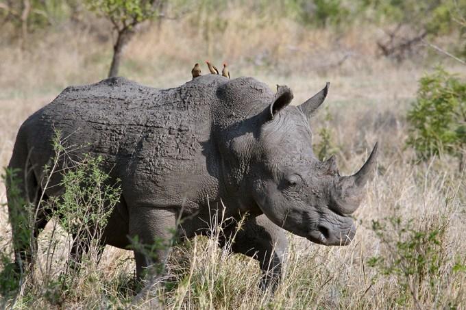Humanos acham animais grandes mais carismáticos que os pequenos