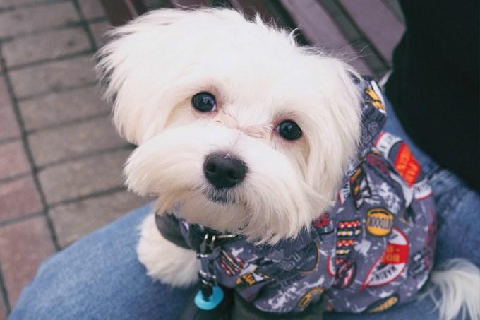 Cães provavelmente não nos entendem tanto como achamos, diz estudo