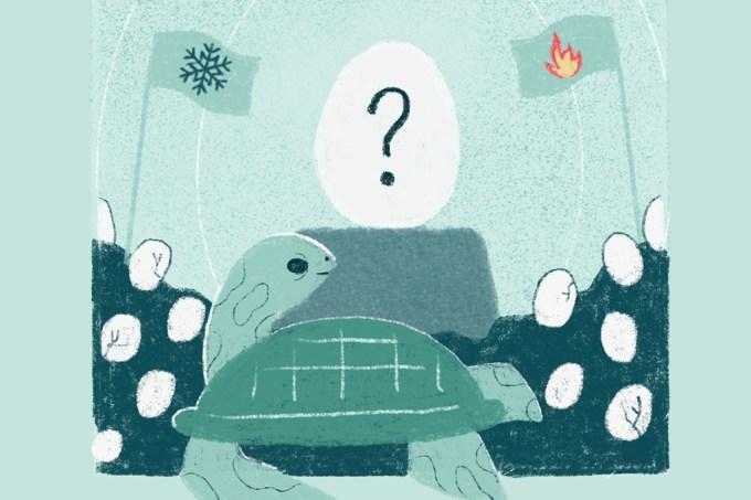 ORCL | Se o sexo das tartarugas é determinado pela temperatura, como são os cromossomos?