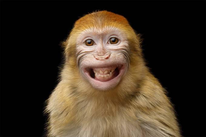 """Novos protocolos de conservação incluem fim das """"selfies"""" com macacos"""