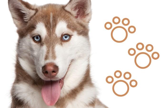 SI_101_cachorros_atletas