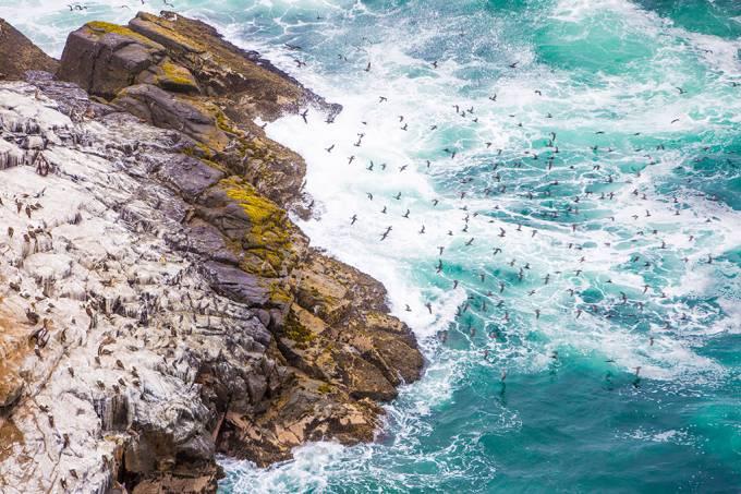 Cocô de aves marinhas ajudaram antigas comunidades da América do Sul a plantarem no deserto