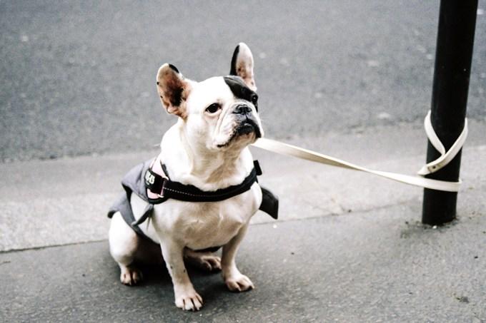 Humanos podem ter domesticado cães por acidente