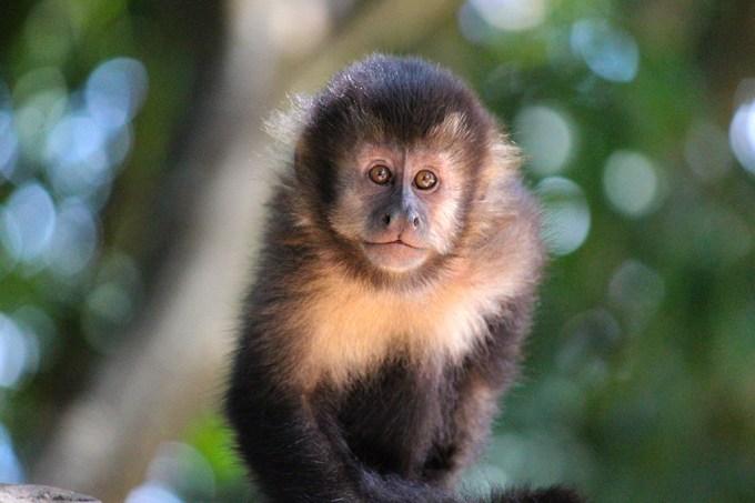 macacos-daltonicos_site
