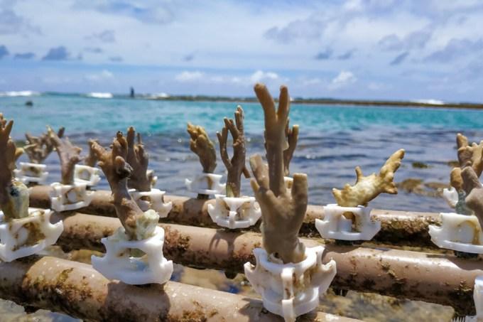 corais_site