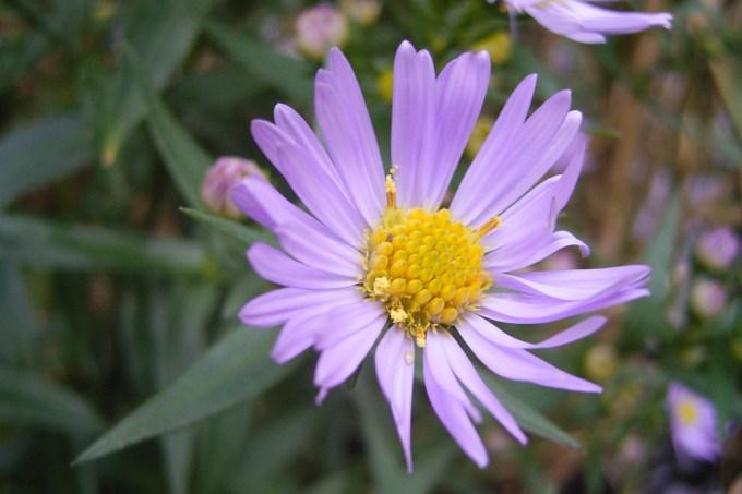 A foto de uma flor que está atraindo 90 milhões de visualizações por dia na Wikipédia – e ninguém sabe por quê.