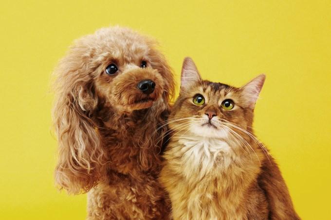 nomes-cães-gatos_site