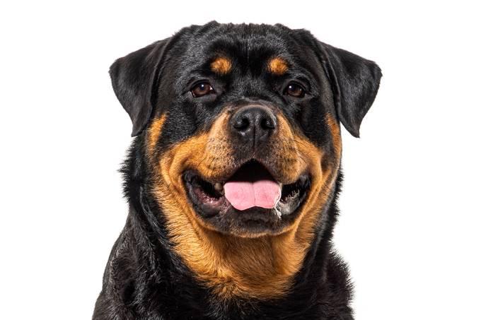 Tumor nos ossos em cachorros grandes raças porte [facebook]