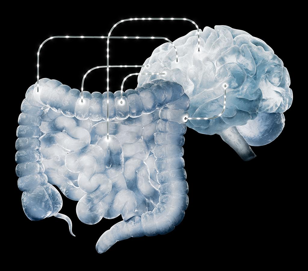 O sistema digestivo, e as bactérias que vivem nele, têm um canal direto de comunicação com o cérebro: o nervo vago.