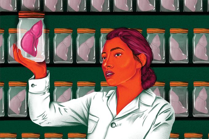 Brasileiros testam técnica para fazer fígado em laboratório