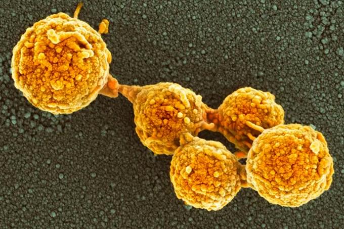 Cientistas criam células artificiais que podem se dividir como bactérias