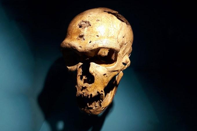 Estudo sugere que neandertais podiam falar e entender linguagem