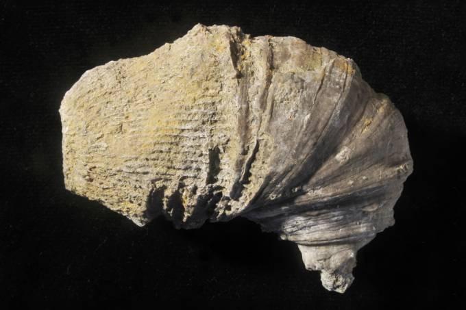 Menino de seis anos encontra fóssil de 500 milhões de anos em seu quintal