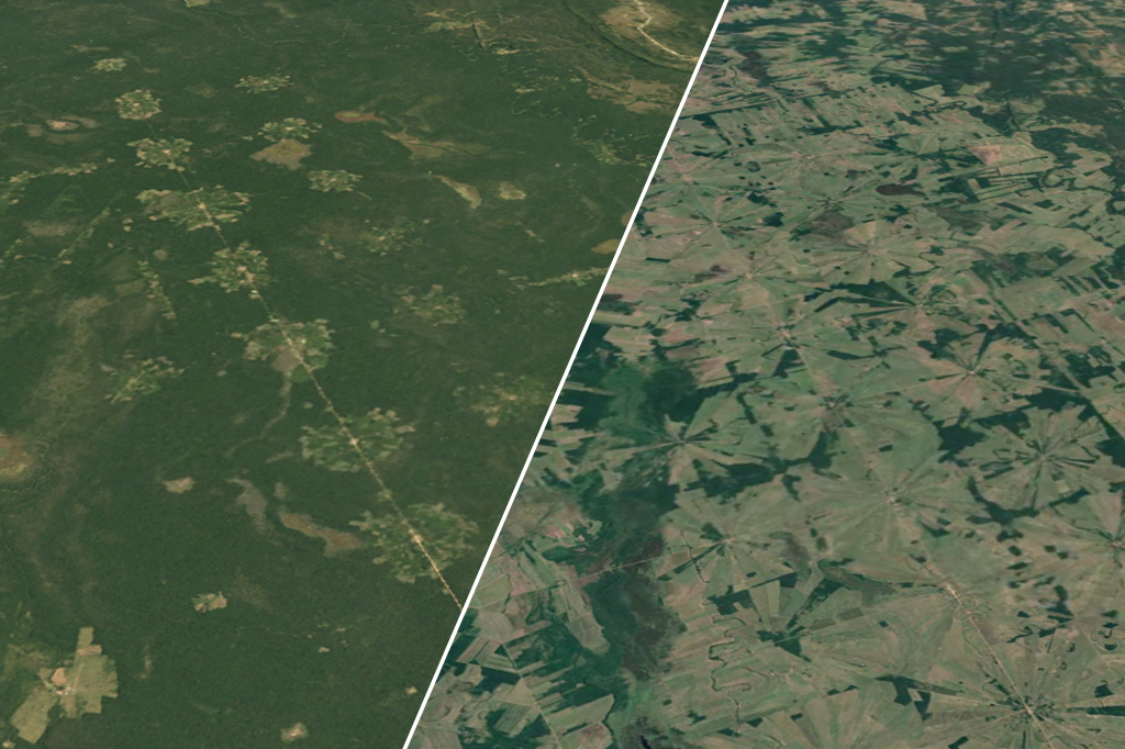 Imagem mostrando a diferença visual de um trecho da floresta amazônica nos anos 1984 e 2020.