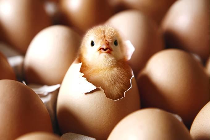 Quem veio primeiro, o ovo ou a galinha? (teste dos estagiários)