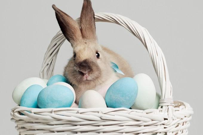 Efeméride | Por que o ovo e o coelho são símbolos da páscoa?