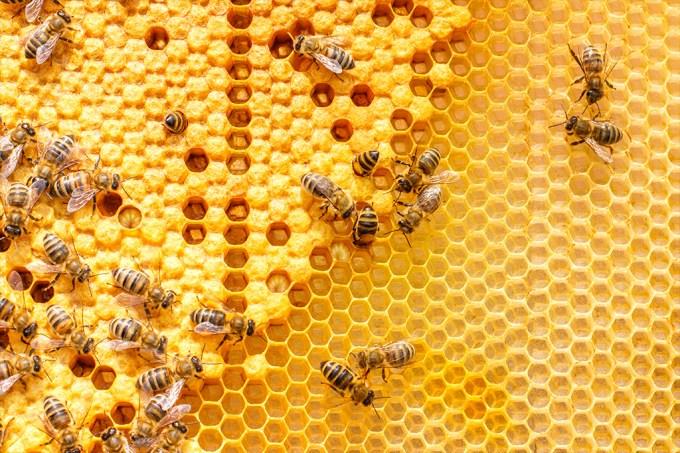 Bzzzzzz como abelhas se imunizam contra doenças