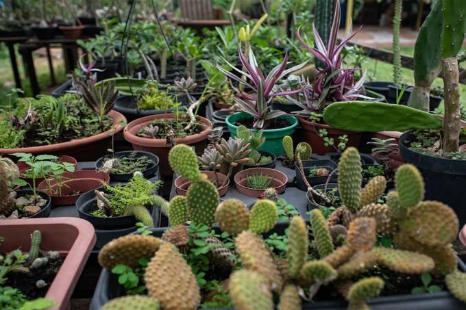 Evergreen | Manual: como cuidar das suas plantas?