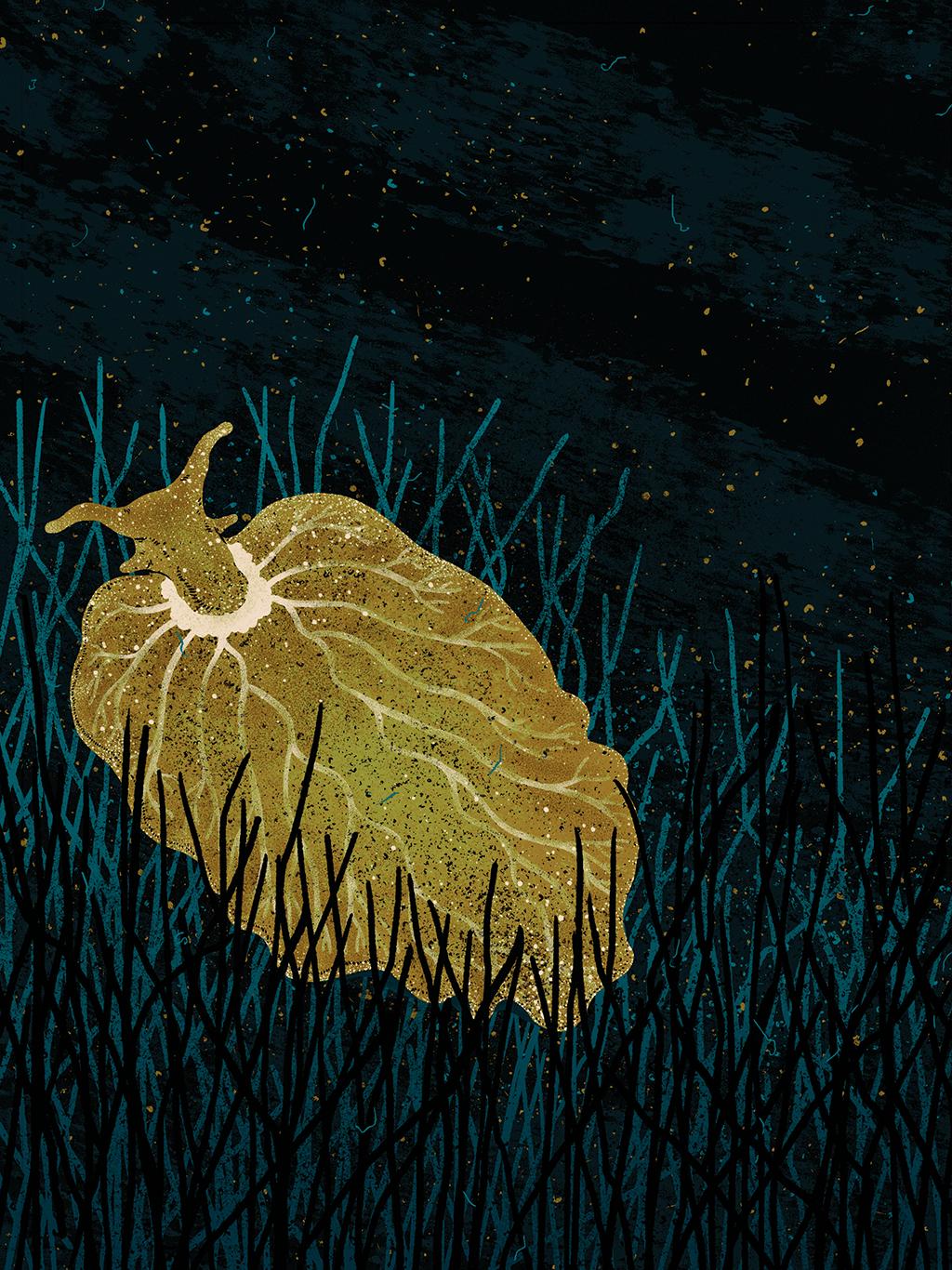 Ilustração da lesma marinha E. chlorotica se alimentando de algas.