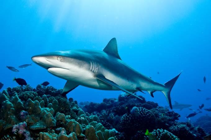 SI_427_novas tubarões covid