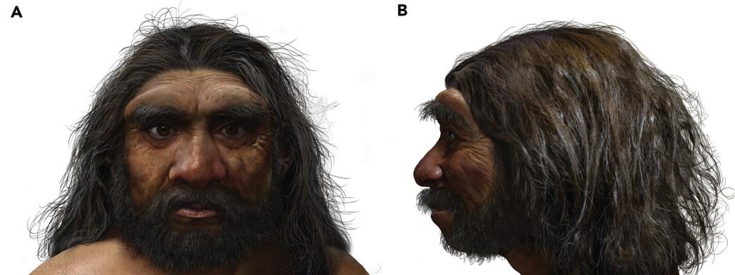 Reconstituição do Homo longi feita por Chuang Zhao.
