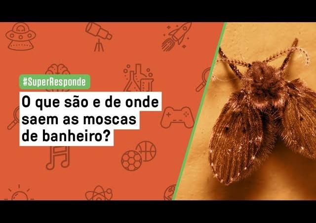O que são e de onde saem as moscas de banheiro?   SUPER Responde