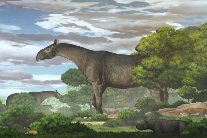 Rinoceronte gigante desenterrado na China foi um dos maiores mamíferos que já viveu