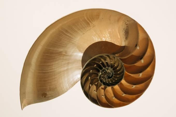 Arquivo O que é a sequência de Fibonacci