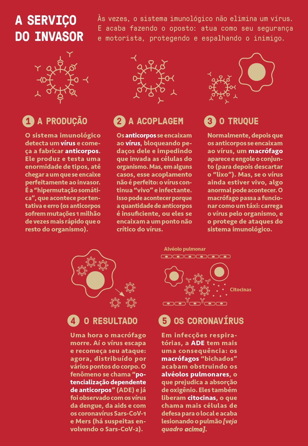 Infográfico mostrando como, às vezes, o sistema imunológico não elimina um vírus, mas ajuda a protegê-lo e espalhá-lo mais ainda.