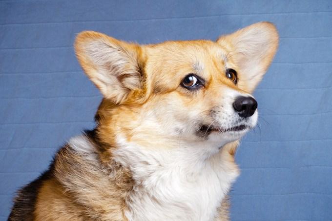Cães tendem a ignorá-lo se souberem que você está mentindo