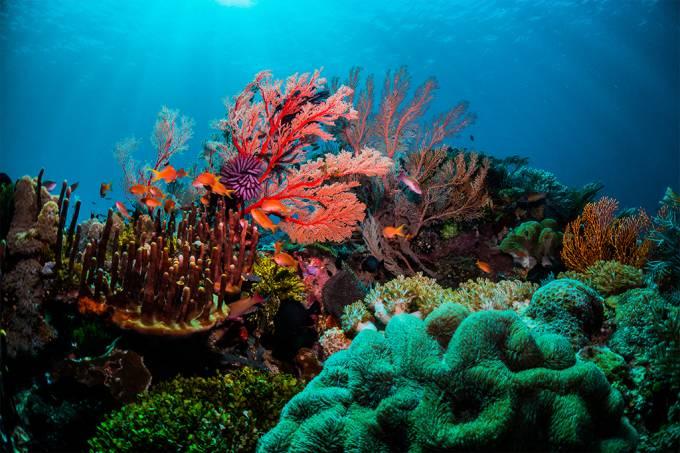 corais do atlântico tropical têm futuro ameaçado pela crise climática